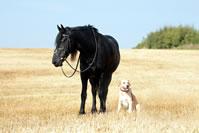 Tierhalterhaftpflicht Vergleich