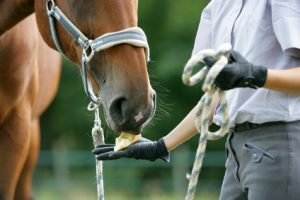 Pferdehalterversicherung Vergleich